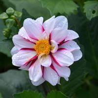 kolorowy kwiatek z brylantami
