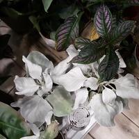 Kwiaty do domu.....