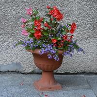 kwiaty w dużej donicy