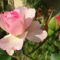 Kwitną na okrągło :)