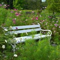 Miło się odpoczywa na ładnej ławce wśród kwiatów