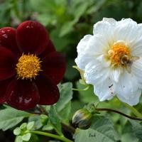 para kwiatków