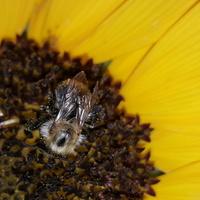 Pracowita pszczółka.....