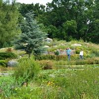 Rośliny i staw w OB w Powsinie