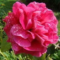 Różowa królewna:)