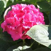 W pełni kwitnienia