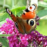 Wrócił jeden motylek;)