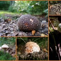 wrześniowe grzyby z Beskidu Śląskiego ☺