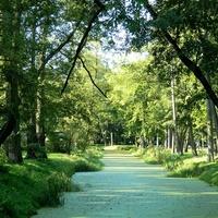 Zielona rzeka;)