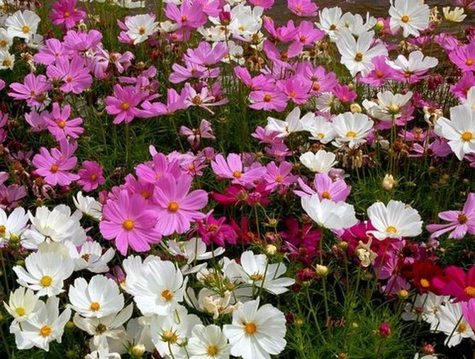 Było lato, były kolorowe kwiaty