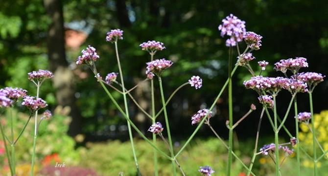 delikatne kwiaty