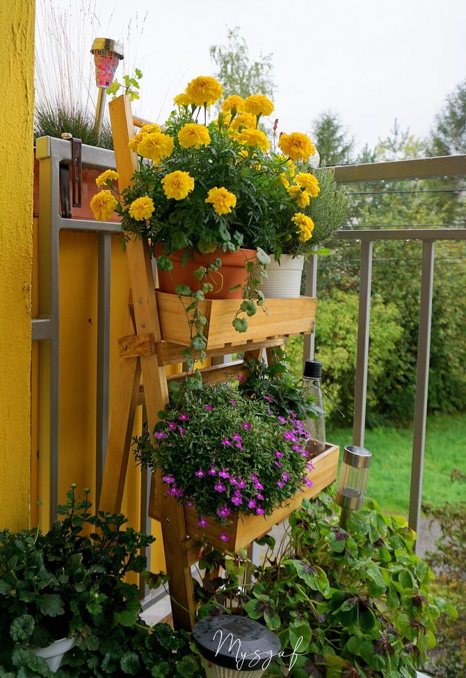 deszczowe wieści z balkonu ☺