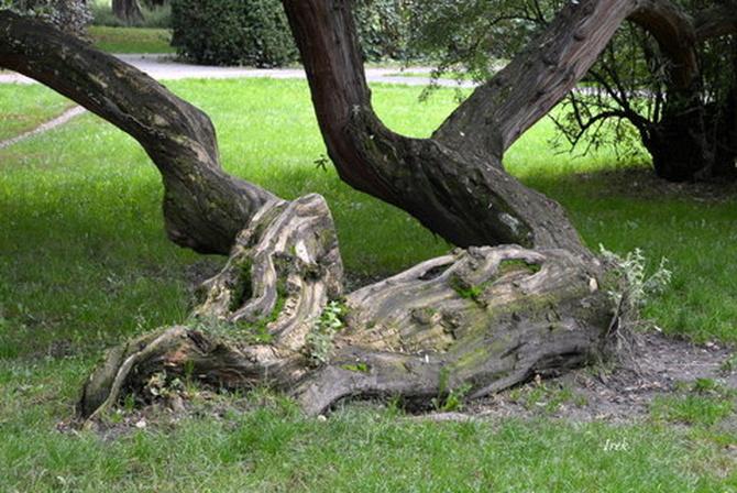 Drzewo w parku, które samo sobie radzi