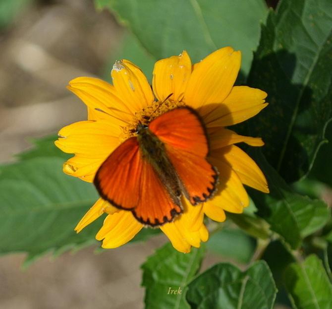 duży kwiat i mały motyl