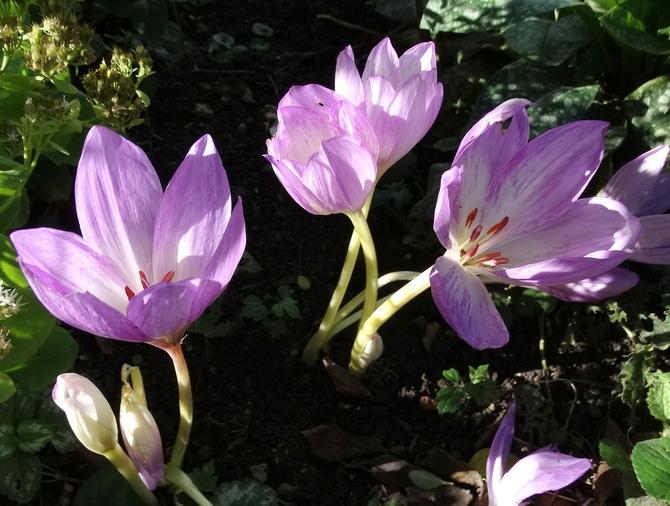 Jeszcze kwitną :)