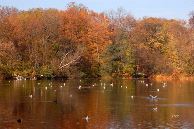 kolorowe drzewa w parku
