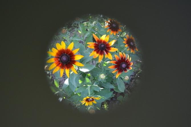 Kula Ziemska, a na niej pozostało kilka kwiatów