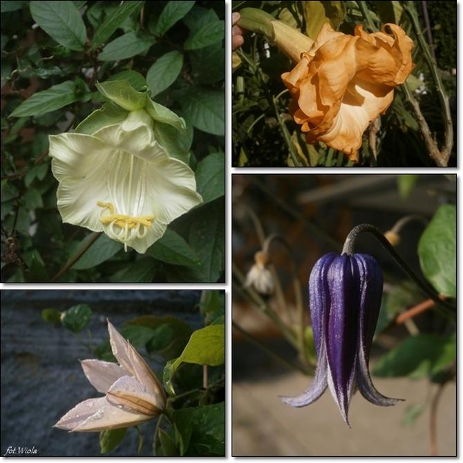 Ogród dzisiaj....