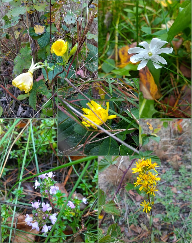 Październikowych kwiatów ciąg dalszy