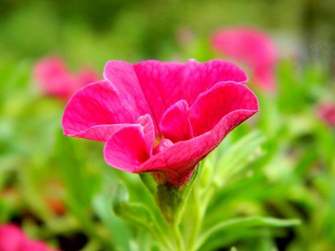 Róż na przyjemny wieczór:)