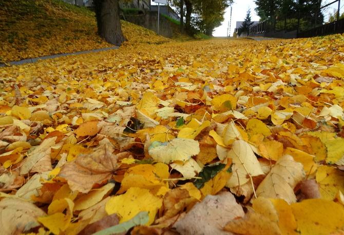 Szszszszszelest liści do snu :))