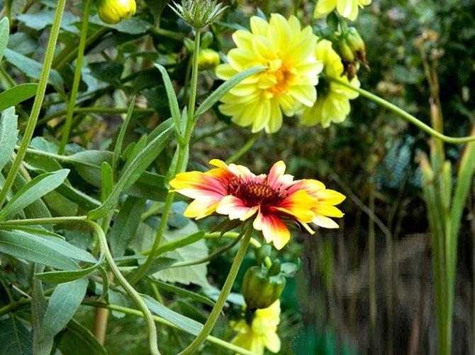 W jesiennym ogródku:)