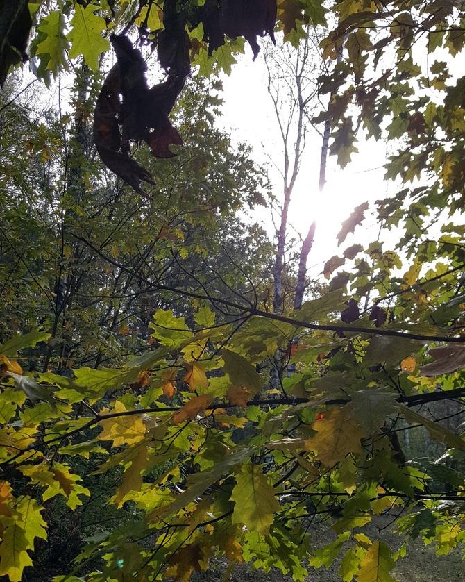 W lesie......