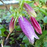 A w ogródku. . . . . . . . :)