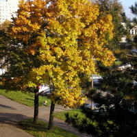 Jesień na mojej ulicy