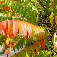 Jesień w kolorach:)