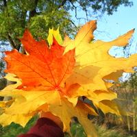 Jesienny bukiecik dla Was :)