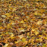 Jesienny, szeleszczący dywan