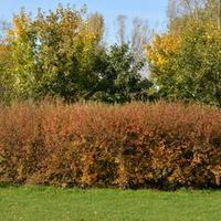 Jesienny widok dzisiaj w parku