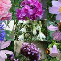 Jeszcze sporo kwiatków