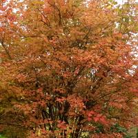 Kalina w jesiennych barwach