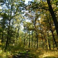 Kolory jesieni w lesie
