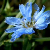 Łąkowy błękit:)