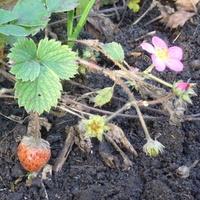 Kwitną i owocują! ;)))