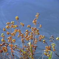Nasionka popłyną z wodą