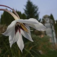 Ostatni kwiatek