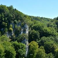 piękny las w Jurze Krakowsko-Częstochowskiej