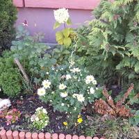 Przy ogródku przyblokowym.....