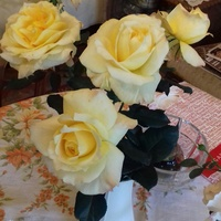 Róza Sunny Sky