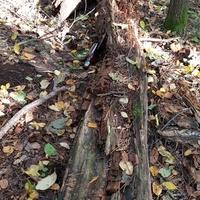 Siedzisko w lesie......