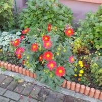 W blokowisku kwitną...