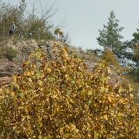 W górach coraz więcej jesieni...