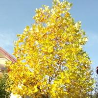 W żółtych płomieniach liści...