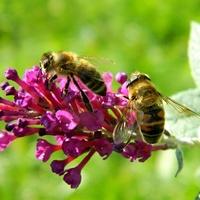 Zaroiło się od pszczółek:)