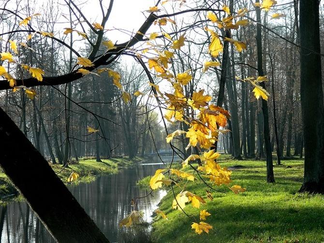 Coraz mniej liści na drzewach:)