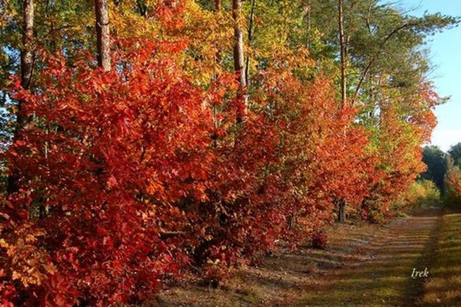 Droga w lesie jesienią